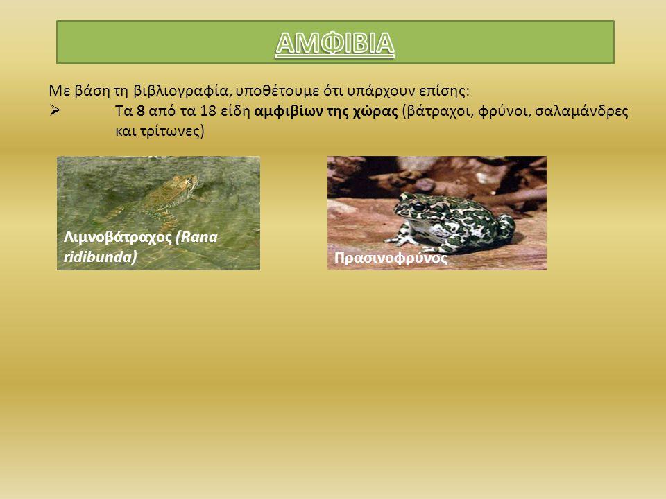 Με βάση τη βιβλιογραφία, υποθέτουμε ότι υπάρχουν επίσης:  Τα 8 από τα 18 είδη αμφιβίων της χώρας (βάτραχοι, φρύνοι, σαλαμάνδρες και τρίτωνες) Λιμνοβά