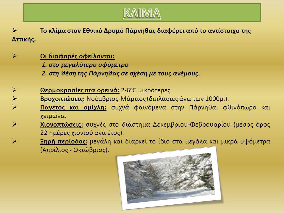  Τα 21 από τα 61 είδη ερπετών που έχει η Ελλάδα (χελώνες, σαύρες και φίδια) Σαύρα (Podarcis erhardii Σαΐτα (Coluber najadum)