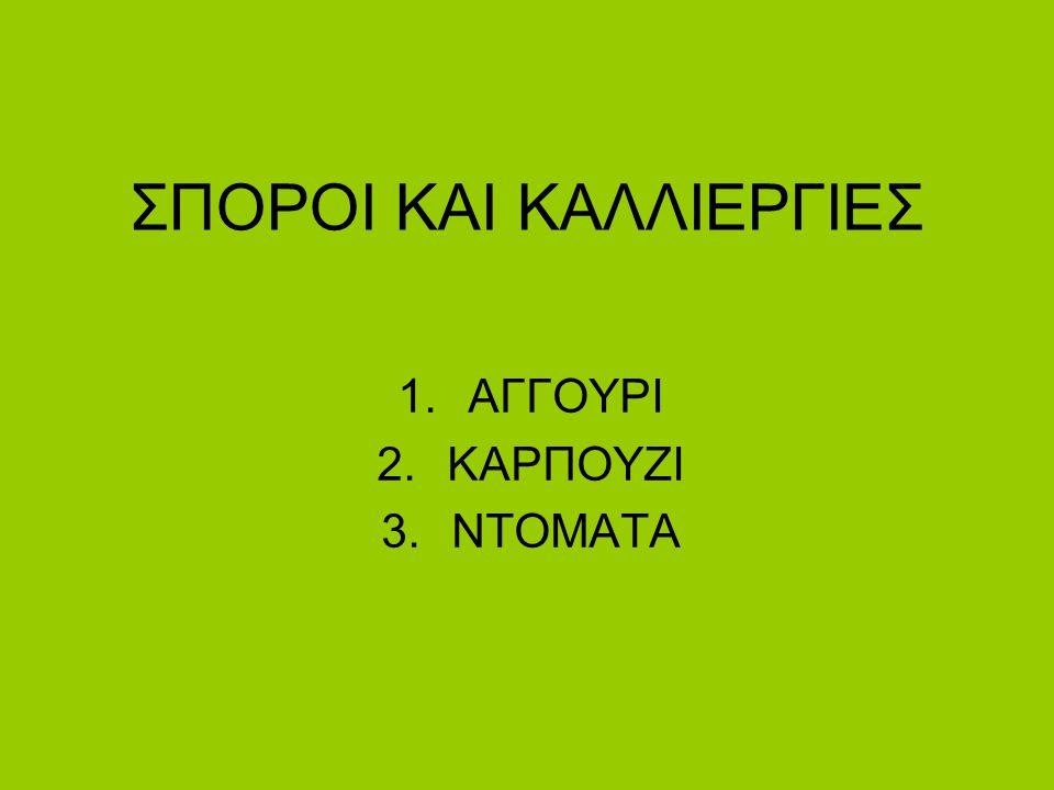 ΣΠΟΡΟΙ ΚΑΙ ΚΑΛΛΙΕΡΓΙΕΣ 1.ΑΓΓΟΥΡΙ 2.ΚΑΡΠΟΥΖΙ 3.NTOMATA