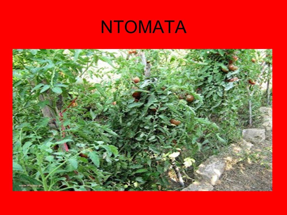 1) Ο σπόρος να είναι υγιής.Να προέρχεται από φυτά που δεν είχαν αρρώστια και δεν ήταν εκφυλισμένα.