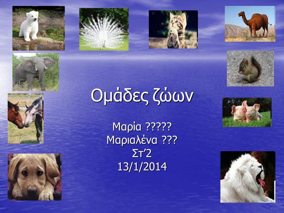 Ομάδες ζώων Μαρία Μαριαλένα Στ'2 13/1/2014