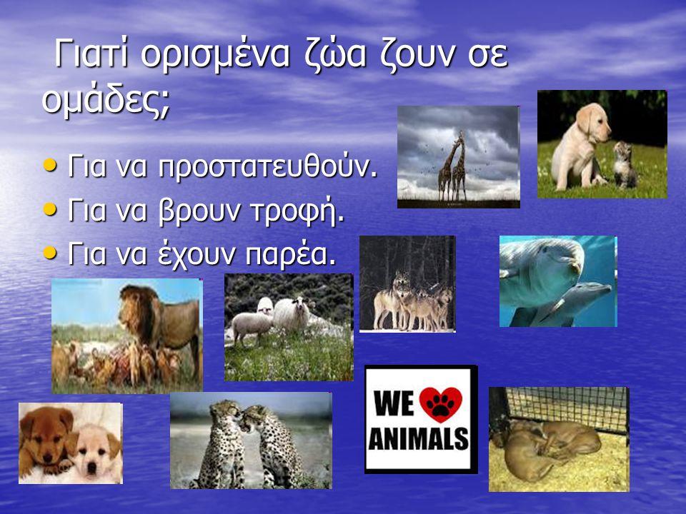 Γιατί ορισμένα ζώα ζουν σε ομάδες; Γιατί ορισμένα ζώα ζουν σε ομάδες; Για να προστατευθούν.