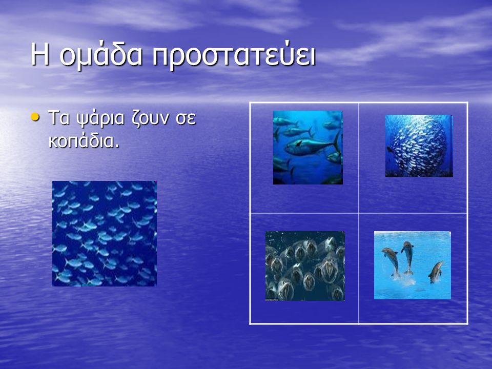 Η ομάδα προστατεύει Τα ψάρια ζουν σε κοπάδια. Τα ψάρια ζουν σε κοπάδια.