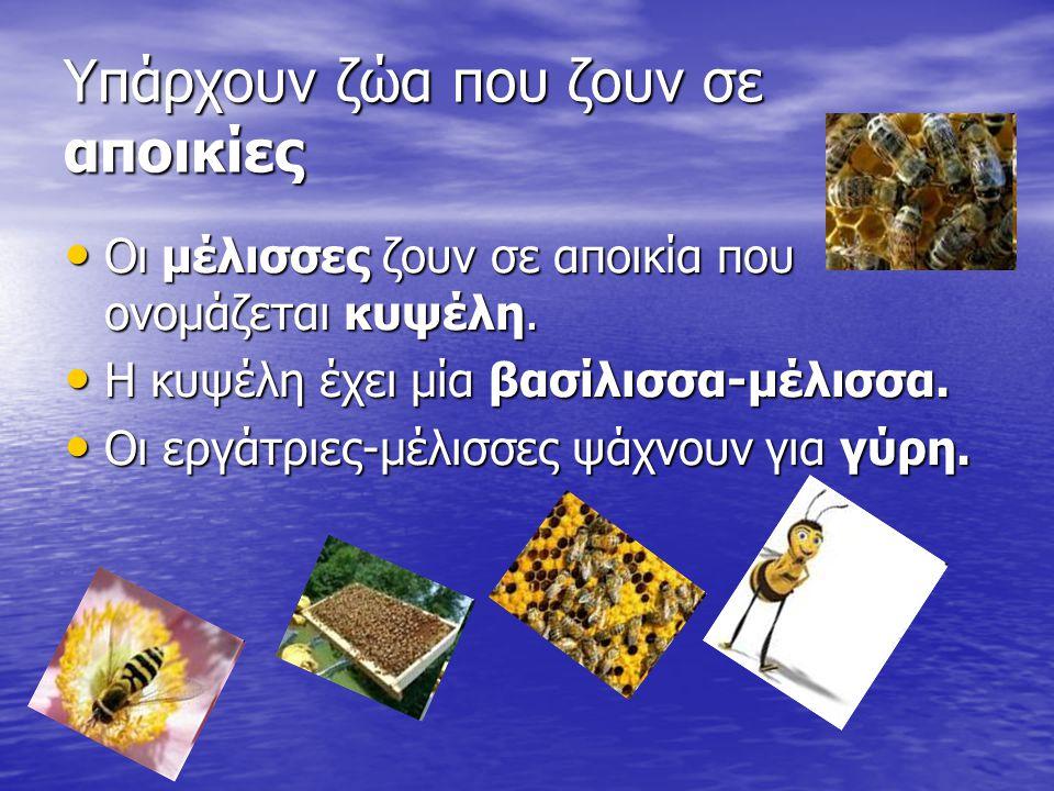 Υπάρχουν ζώα που ζουν σε αποικίες Οι μέλισσες ζουν σε αποικία που ονομάζεται κυψέλη.