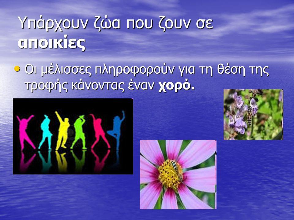 Υπάρχουν ζώα που ζουν σε αποικίες Οι μέλισσες πληροφορούν για τη θέση της τροφής κάνοντας έναν χορό.