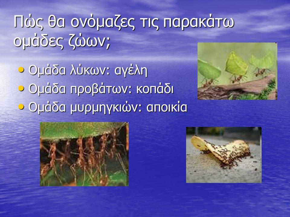 Πώς θα ονόμαζες τις παρακάτω ομάδες ζώων; Ομάδα λύκων: αγέλη Ομάδα λύκων: αγέλη Ομάδα προβάτων: κοπάδι Ομάδα προβάτων: κοπάδι Ομάδα μυρμηγκιών: αποικία Ομάδα μυρμηγκιών: αποικία