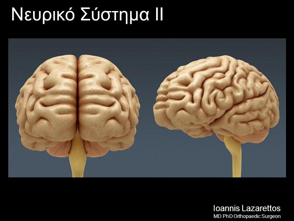 Αγγεία του Εγκεφάλου Καρωτιδικό Σύστημα (Έσω Καρωτίδες) Οφθαλμική αρτηρία Πρόσθια εγκεφαλική Μέση εγκεφαλική Πρόσθια χοριοειδή Οπίσθια αναστομωτική Σπονδυλοβασικό Σύστημα Οπίσθια κάτω παρεγκεφαλιδική αρτηρία Βασική αρτηρία Δε Οπίσθια εγκεφαλική αρτηρία Αρ Οπίσθια εγκεφαλική αρτηρία Ioannis Lazarettos MD PhD Orthopaedic Surgeon 2