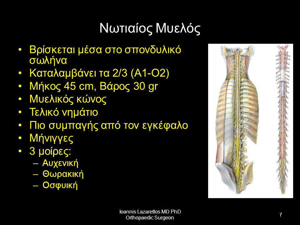 Νωτιαίος Μυελός Νωτιαία νεύρα Οσφυικά και Ιερά νεύρα σχηματίζουν την ιππουρίδα Ioannis Lazarettos MD PhD Orthopaedic Surgeon 8