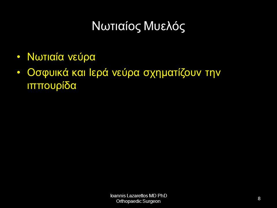 Νωτιαίος Μυελός Νωτιαία νεύρα 31-32 ζεύγη (μεσοσπονδύλια τρήματα) 2 Ογκώματα –Αυχενικό (Προμήκης-Θ2) –Οσφυικό (Θ10-Μυελικός Κώνος) –Μυελικός Κώνος Κοκκυγικά ν.