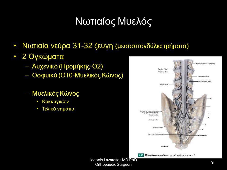 Νωτιαίος Μυελός Νωτιαία νεύρα 31-32 ζεύγη (μεσοσπονδύλια τρήματα) 2 Ογκώματα –Αυχενικό (Προμήκης-Θ2) –Οσφυικό (Θ10-Μυελικός Κώνος) –Μυελικός Κώνος Κοκ