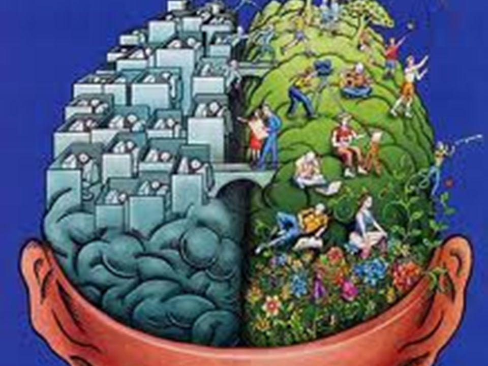 Η κατώτερη και η ανώτερη οδός. Στο βιβλίο του Daniel Goleman χωρίζει τις λειτουργίες και τα συστήματα του εγκεφάλου σε ανώτερη και κατώτερη οδό. Α. ΚΑ