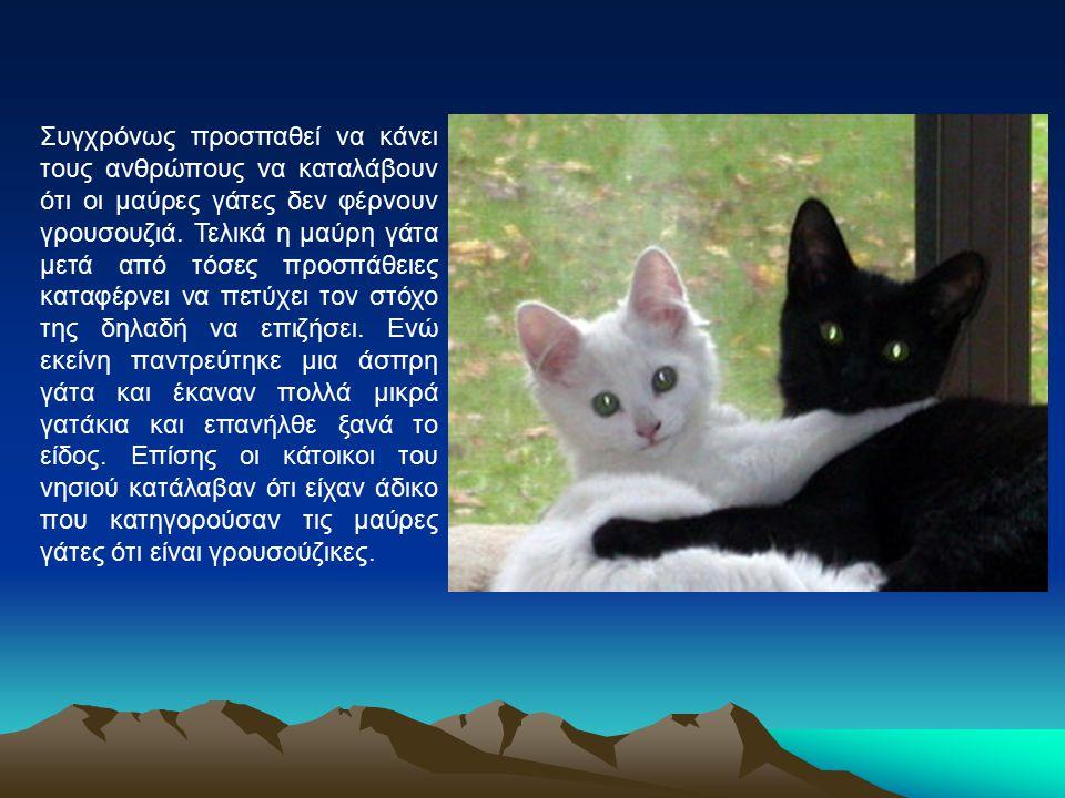Συγχρόνως προσπαθεί να κάνει τους ανθρώπους να καταλάβουν ότι οι μαύρες γάτες δεν φέρνουν γρουσουζιά. Τελικά η μαύρη γάτα μετά από τόσες προσπάθειες κ