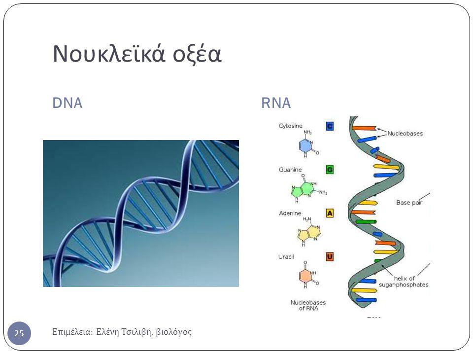 Νουκλεϊκά οξέα DNARNA Επιμέλεια : Ελένη Τσιλιβή, βιολόγος 25
