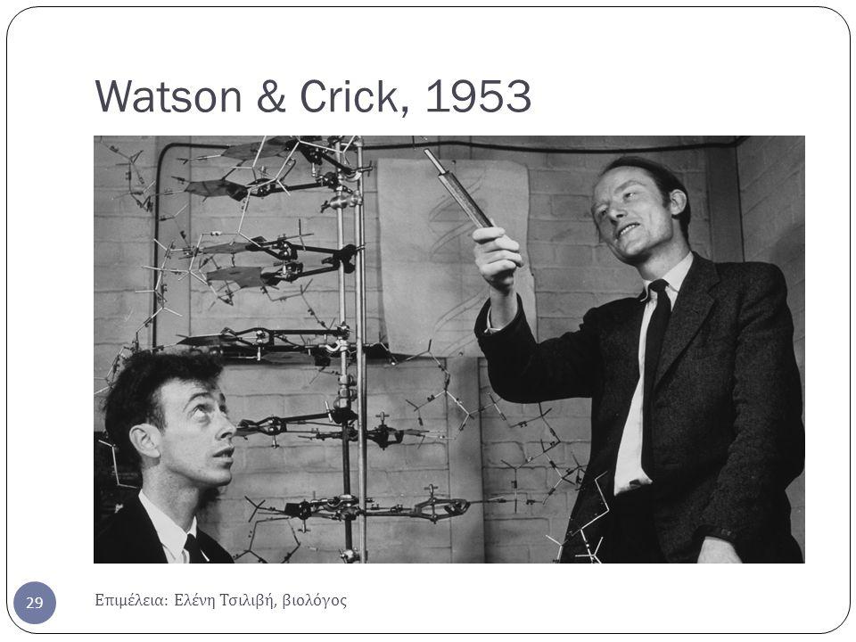 Watson & Crick, 1953 Επιμέλεια : Ελένη Τσιλιβή, βιολόγος 29