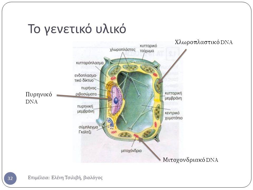 Το γενετικό υλικό Επιμέλεια : Ελένη Τσιλιβή, βιολόγος 32 Πυρηνικό DNA Χλωροπλαστικό DNA Μιτοχονδριακό DNA