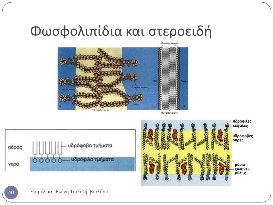 Φωσφολιπίδια και στεροειδή Επιμέλεια : Ελένη Τσιλιβή, βιολόγος 40