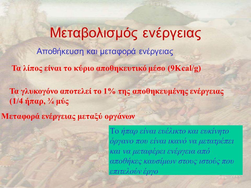 Μεταβολισμός ενέργειας Αποθήκευση και μεταφορά ενέργειας Τα λίπος είναι το κύριο αποθηκευτικό μέσο (9Kcal/g) Τα γλυκογόνο αποτελεί το 1% της αποθηκευμένης ενέργειας (1/4 ήπαρ, ¾ μύς Μεταφορά ενέργειας μεταξύ οργάνων Tο ήπαρ είναι ευέλικτο και ευκίνητο όργανο που είναι ικανό να μετατρέπει και να μεταφέρει ενέργεια από αποθήκες καυσίμων στους ιστούς που επιτελούν έργο