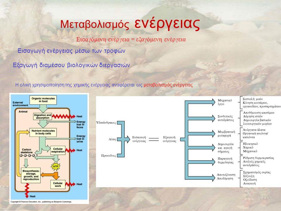 Μεταβολισμός ενέργειας Εισαγόμενη ενέργεια = εξαγόμενη ενέργεια Εισαγωγή ενέργειας μέσω των τροφών Εξαγωγή διαμέσου βιολογικών διεργασιών Η ολική χρησιμοποίηση της χημικής ενέργειας αναφέρεται ως μεταβολισμός ενέργειας