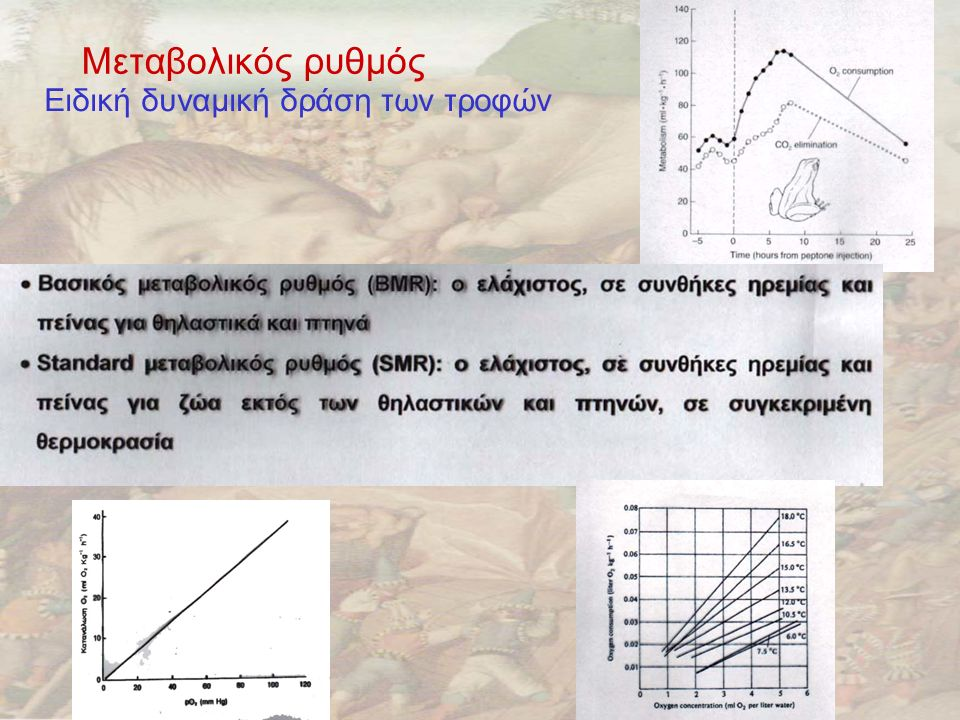 Μεταβολικός ρυθμός Ειδική δυναμική δράση των τροφών Η θερμοκρασία και η συγκέντρωση Ο 2 επηρεάζουν τον μεταβολικό ρυθμό σε πολλές περιπτώσεις εξωθερμικών ζώων