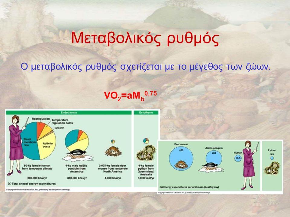 Μεταβολικός ρυθμός Ο μεταβολικός ρυθμός σχετίζεται με το μέγεθος των ζώων. VO 2 =aM b 0,75