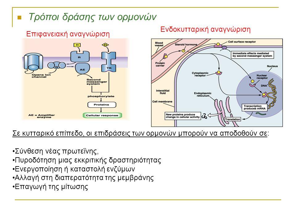 Τρόποι δράσης των ορμονών Σε κυτταρικό επίπεδο, οι επιδράσεις των ορμονών μπορούν να αποδοθούν σε: Σύνθεση νέας πρωτεΐνης, Πυροδότηση μιας εκκριτικής δραστηριότητας Ενεργοποίηση ή καταστολή ενζύμων Αλλαγή στη διαπερατότητα της μεμβράνης Επαγωγή της μίτωσης Επιφανειακή αναγνώριση Ενδοκυτταρική αναγνώριση
