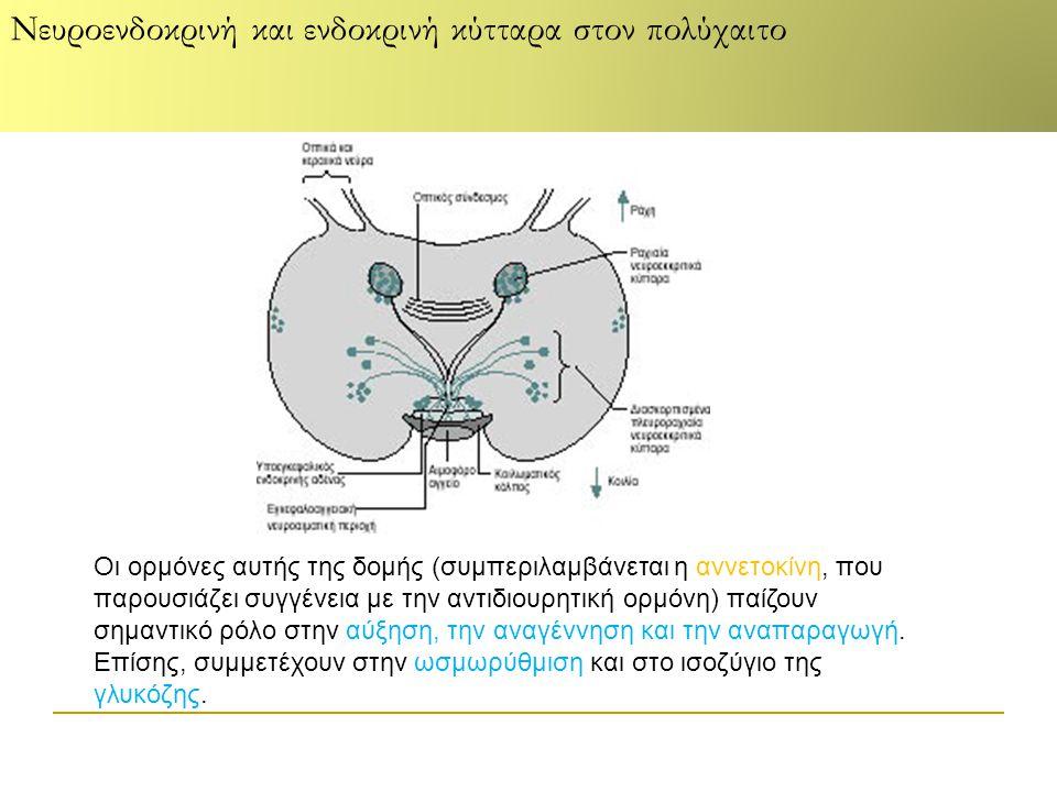 Οι ορμόνες αυτής της δομής (συμπεριλαμβάνεται η αννετοκίνη, που παρουσιάζει συγγένεια με την αντιδιουρητική ορμόνη) παίζουν σημαντικό ρόλο στην αύξηση, την αναγέννηση και την αναπαραγωγή.