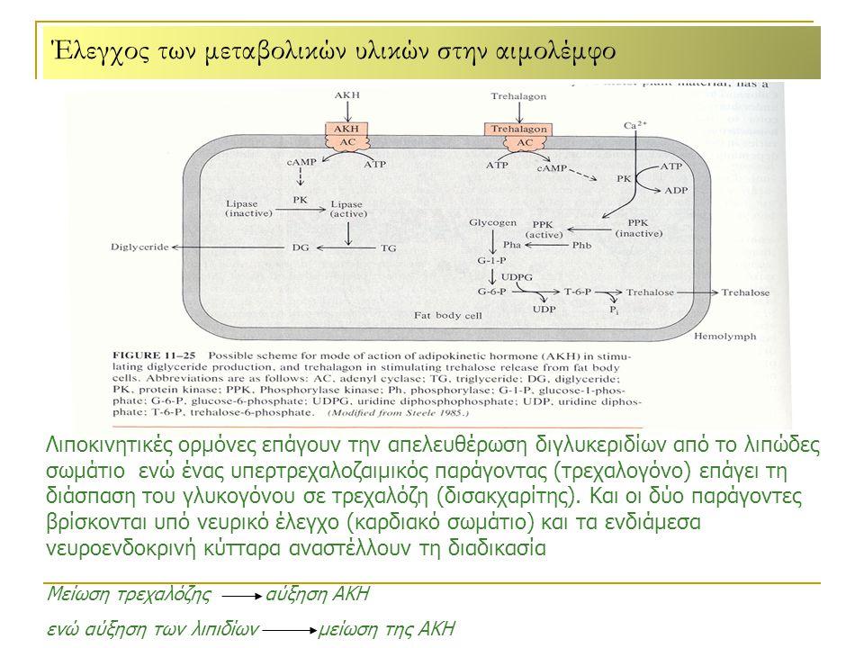 Έλεγχος των μεταβολικών υλικών στην αιμολέμφο Λιποκινητικές ορμόνες επάγουν την απελευθέρωση διγλυκεριδίων από το λιπώδες σωμάτιο ενώ ένας υπερτρεχαλοζαιμικός παράγοντας (τρεχαλογόνο) επάγει τη διάσπαση του γλυκογόνου σε τρεχαλόζη (δισακχαρίτης).