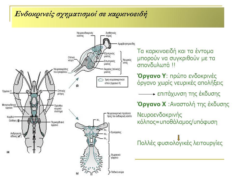 Τα καρκινοειδή και τα έντομα μπορούν να συγκριθούν με τα σπονδυλωτά !.