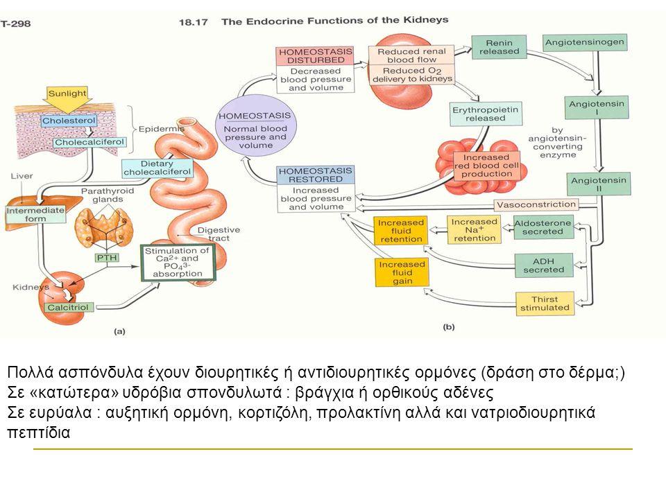 Πολλά ασπόνδυλα έχουν διουρητικές ή αντιδιουρητικές ορμόνες (δράση στο δέρμα;) Σε «κατώτερα» υδρόβια σπονδυλωτά : βράγχια ή ορθικούς αδένες Σε ευρύαλα : αυξητική ορμόνη, κορτιζόλη, προλακτίνη αλλά και νατριοδιουρητικά πεπτίδια
