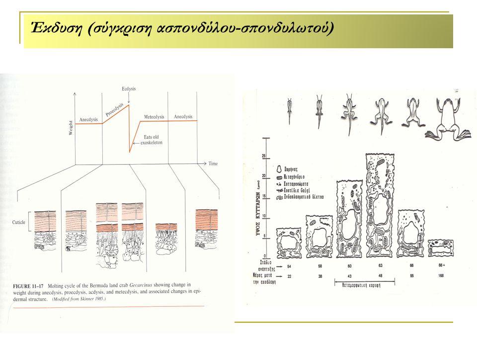 Έκδυση (σύγκριση ασπονδύλου-σπονδυλωτού)