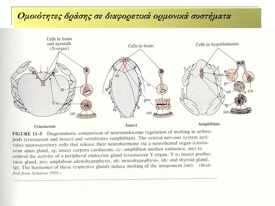 Ομοιότητες δράσης σε διαφορετικά ορμονικά συστήματα