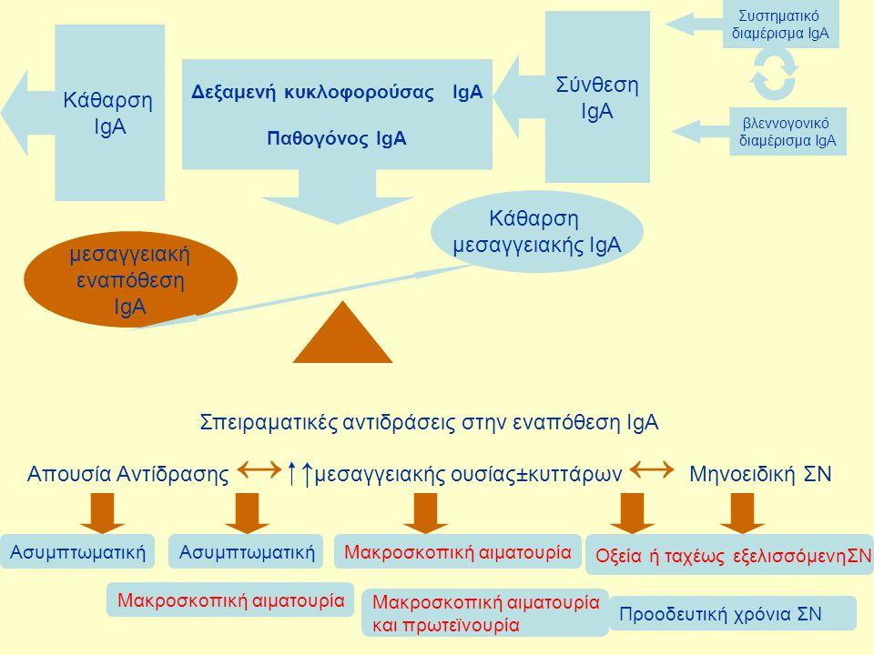 Σύνθεση IgA Κάθαρση IgA Δεξαμενή κυκλοφορούσας IgA Παθογόνος IgA Κάθαρση μεσαγγειακής IgA μεσαγγειακή εναπόθεση IgA Σπειραματικές αντιδράσεις στην ενα