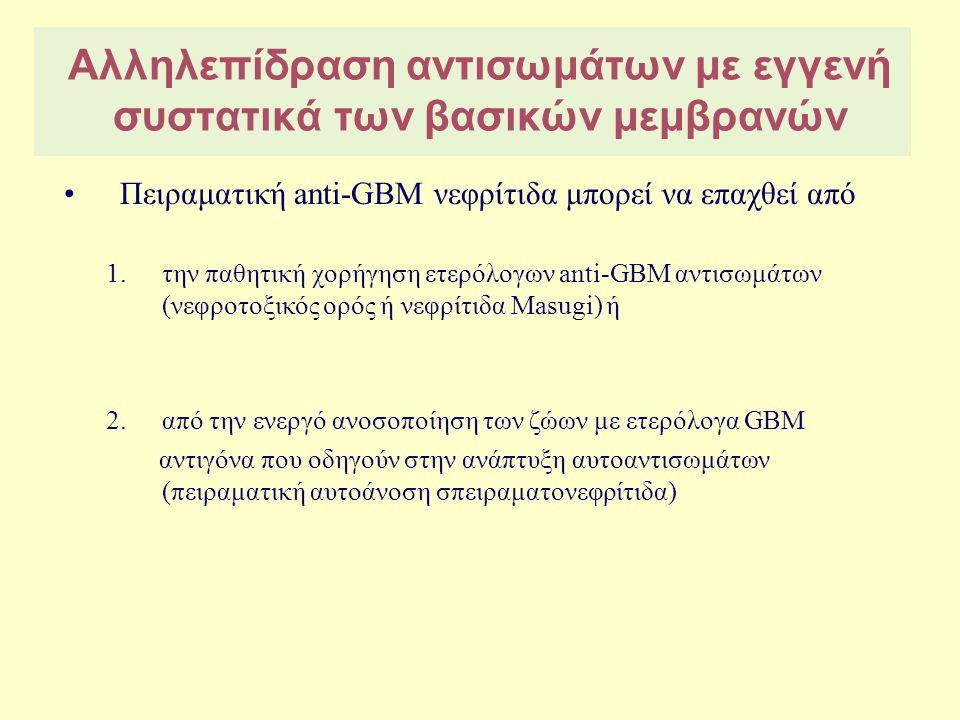Anti-GBM σπειραματονεφρίτιδα Παρουσία αντισώματος (IgG) κατά της α 3 αλύσου του κολλαγόνου IV [α 3 (IV)NC 1 domain] ↓ Καθήλωση συμπληρώματος ↓ Επιστράτευση ουδετεροφίλων και μονοκυττάρων ↓ Παραγωγή πρωτεασών ↓ Διάσπαση τριχοειδικού τοιχώματος και της κάψας του Bowman → Νεκρωτική βλάβη→Μηνοειδής σχηματισμός