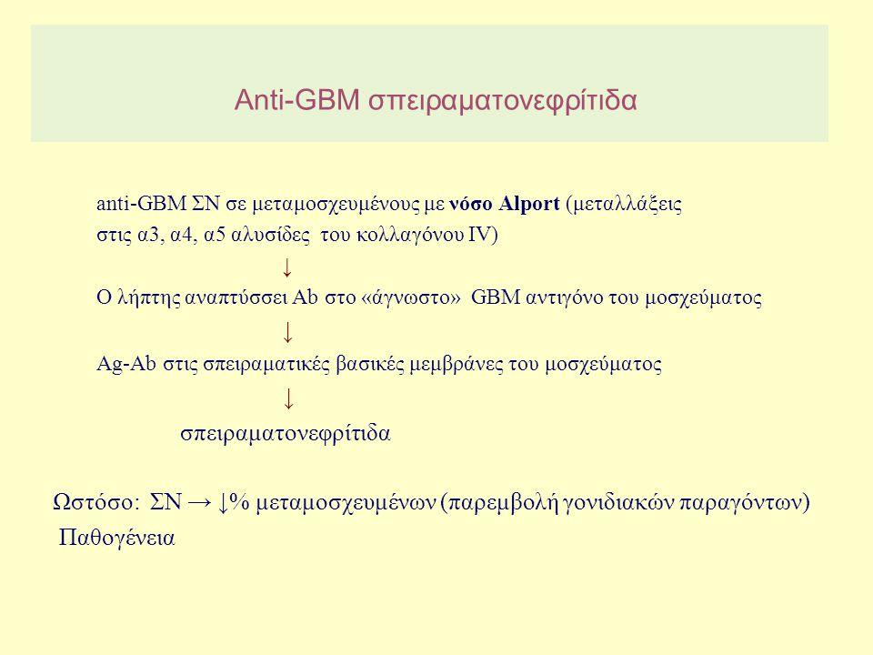 Anti-GBM σπειραματονεφρίτιδα anti-GBM ΣΝ σε μεταμοσχευμένους με νόσο Alport (μεταλλάξεις στις α3, α4, α5 αλυσίδες του κολλαγόνου IV) ↓ Ο λήπτης αναπτύ