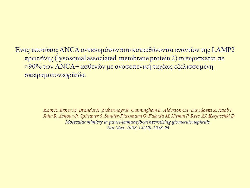 Ένας υποτύπος ANCA αντισωμάτων που κατευθύνονται εναντίον της LAMP2 πρωτεΐνης (lysosomal associated membrane protein 2) ανευρίσκεται σε >90% των ΑΝCA+