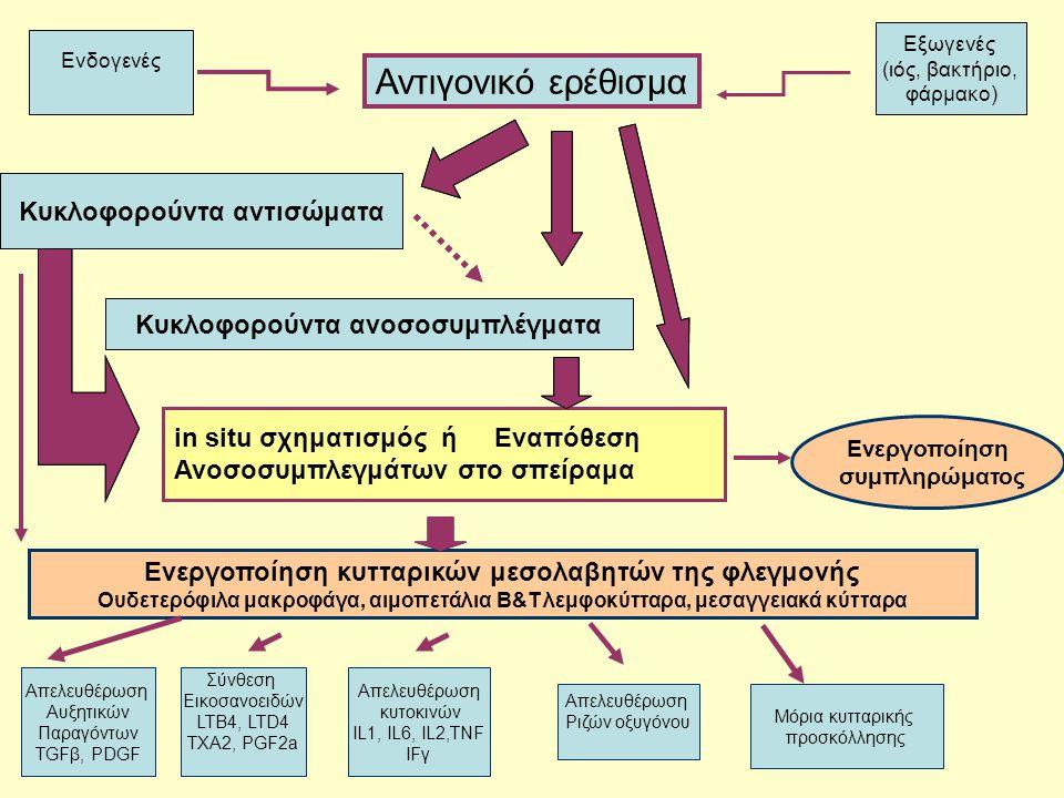Σχηματισμός ανοσοσυμπλεγμάτων Στην κυκλοφορία  σύνδεση αντισωμάτων με διαλυτά αντιγόνα Στα σπειράματα (in situ)  σύνδεση αντισωμάτων με σταθερά αντιγόνα του σπειράματος ή με αντιγόνα που έχουν παγιδευτεί στην περιοχή αυτή