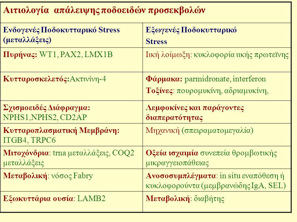Αιτιολογία απάλειψης ποδοειδών προσεκβολών Ενδογενές Ποδοκυτταρικό Stress (μεταλλάξεις) Εξωγενές Ποδοκυτταρικό Stress Πυρήνας: WT1, PAX2, LMX1BΙική λο