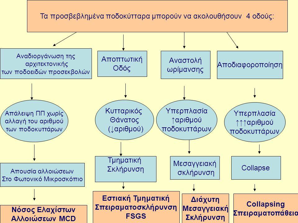 MCNFSGSDMS CG
