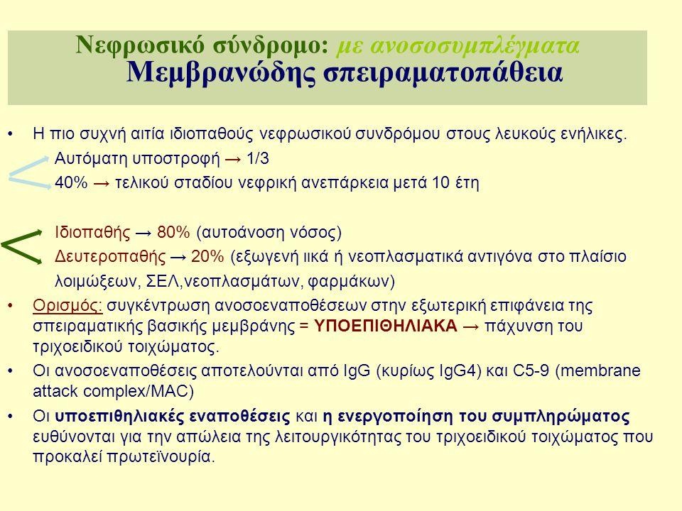 Απελευθέρωση Αυξητικών Παραγόντων TGFβ, PDGF Σύνθεση Εικοσανοειδών LTB4, LTD4 TXA2, PGF2a Απελευθέρωση κυτοκινών ΙL1, IL6, IL2,TNF IFγ Απελευθέρωση Ριζών οξυγόνου Μόρια κυτταρικής προσκόλλησης Εξωγενές (ιός, βακτήριο, φάρμακο) Αντιγονικό ερέθισμα Ενδογενές (νεοπάσία, DNA κτλ) Κυκλοφορούντα αντισώματα Κυκλοφορούντα ανοσοσυμπλέγματα in situ σχηματισμός ή Eναπόθεση Ανοσοσυμπλεγμάτων στο σπείραμα Ενεργοποίηση συμπληρώματος Ενεργοποίηση κυτταρικών μεσολαβητών της φλεγμονής Ουδετερόφιλα μακροφάγα, αιμοπετάλια Β&Τ λεμφοκύτταρα, μεσαγγειακά κύτταρα Απελευθέρωση Αυξητικών Παραγόντων TGFβ, PDGF Κυκλοφορούντα αντισώματα Κυκλοφορούντα ανοσοσυμπλέγματα in situ σχηματισμός ή Eναπόθεση Ανοσοσυμπλεγμάτων στο σπείραμα