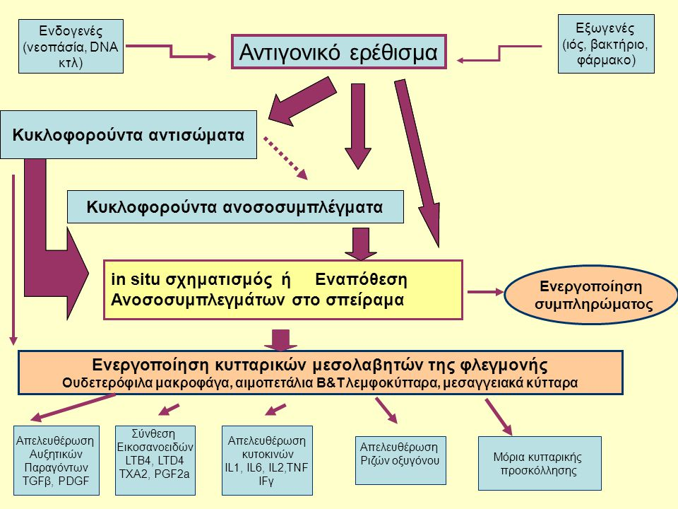 Απελευθέρωση Αυξητικών Παραγόντων TGFβ, PDGF Σύνθεση Εικοσανοειδών LTB4, LTD4 TXA2, PGF2a Απελευθέρωση κυτοκινών ΙL1, IL6, IL2,TNF IFγ Απελευθέρωση Ρι