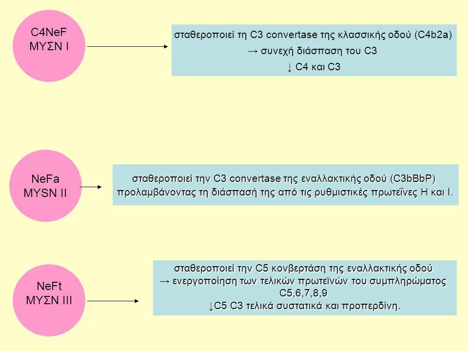 C4NeF ΜΥΣΝ Ι σταθεροποιεί τη C3 convertase της κλασσικής οδού (C4b2a) → συνεχή διάσπαση του C3 ↓ C4 και C3 NeFt MYΣΝ ΙΙΙ σταθεροποιεί την C5 κονβερτάσ