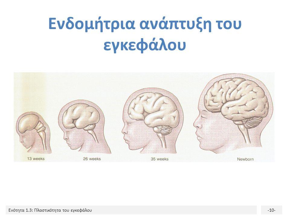 Ενότητα 1.3: Πλαστικότητα του εγκεφάλου-10- Ενδομήτρια ανάπτυξη του εγκεφάλου