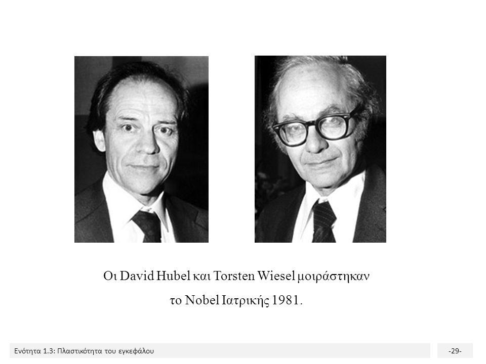 Ενότητα 1.3: Πλαστικότητα του εγκεφάλου-29- Οι David Hubel και Torsten Wiesel μοιράστηκαν το Nobel Ιατρικής 1981.