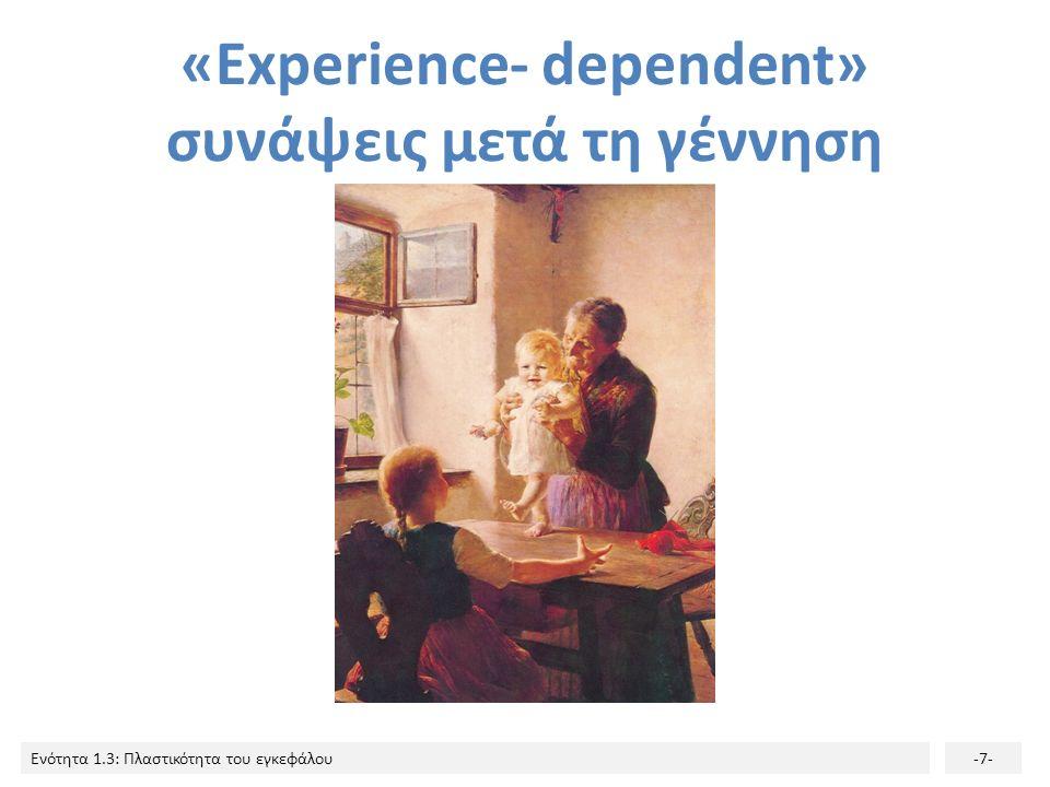 Ενότητα 1.3: Πλαστικότητα του εγκεφάλου-7- «Experience- dependent» συνάψεις μετά τη γέννηση