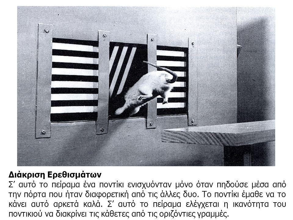 Διάκριση Ερεθισμάτων Σ' αυτό το πείραμα ένα ποντίκι ενισχυόνταν μόνο όταν πηδούσε μέσα από την πόρτα που ήταν διαφορετική από τις άλλες δυο. Το ποντίκ