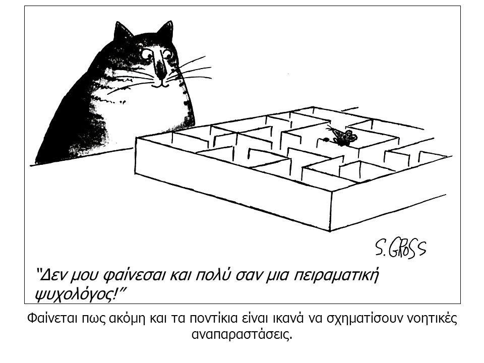 """Φαίνεται πως ακόμη και τα ποντίκια είναι ικανά να σχηματίσουν νοητικές αναπαραστάσεις. """"Δεν μου φαίνεσαι και πολύ σαν μια πειραματική ψυχολόγος!"""""""