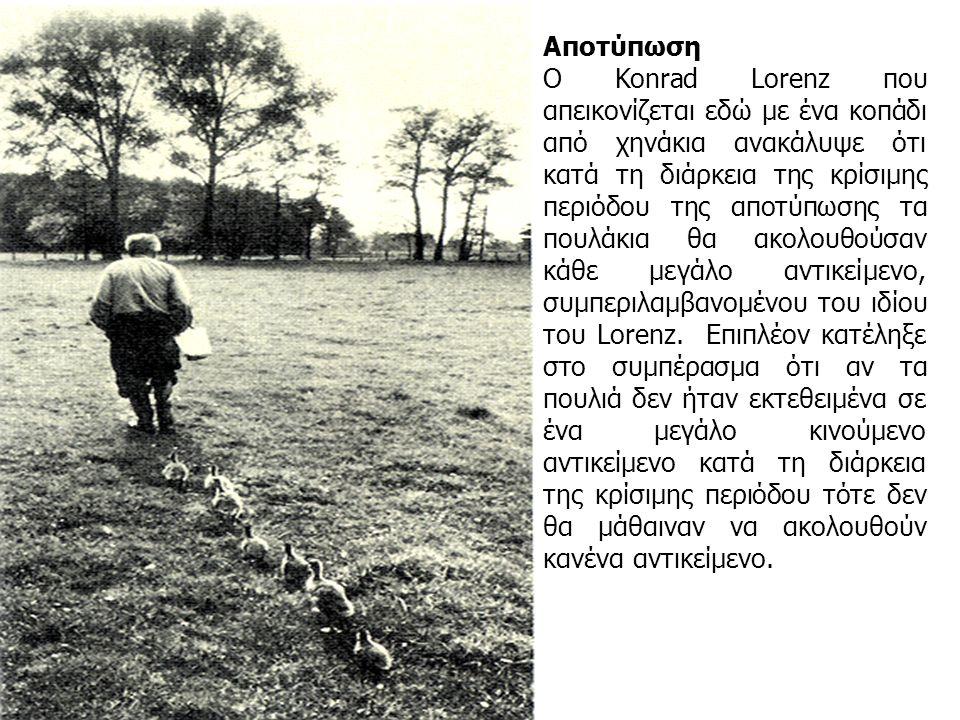 Αποτύπωση Ο Konrad Lorenz που απεικονίζεται εδώ με ένα κοπάδι από χηνάκια ανακάλυψε ότι κατά τη διάρκεια της κρίσιμης περιόδου της αποτύπωσης τα πουλάκια θα ακολουθούσαν κάθε μεγάλο αντικείμενο, συμπεριλαμβανομένου του ιδίου του Lorenz.
