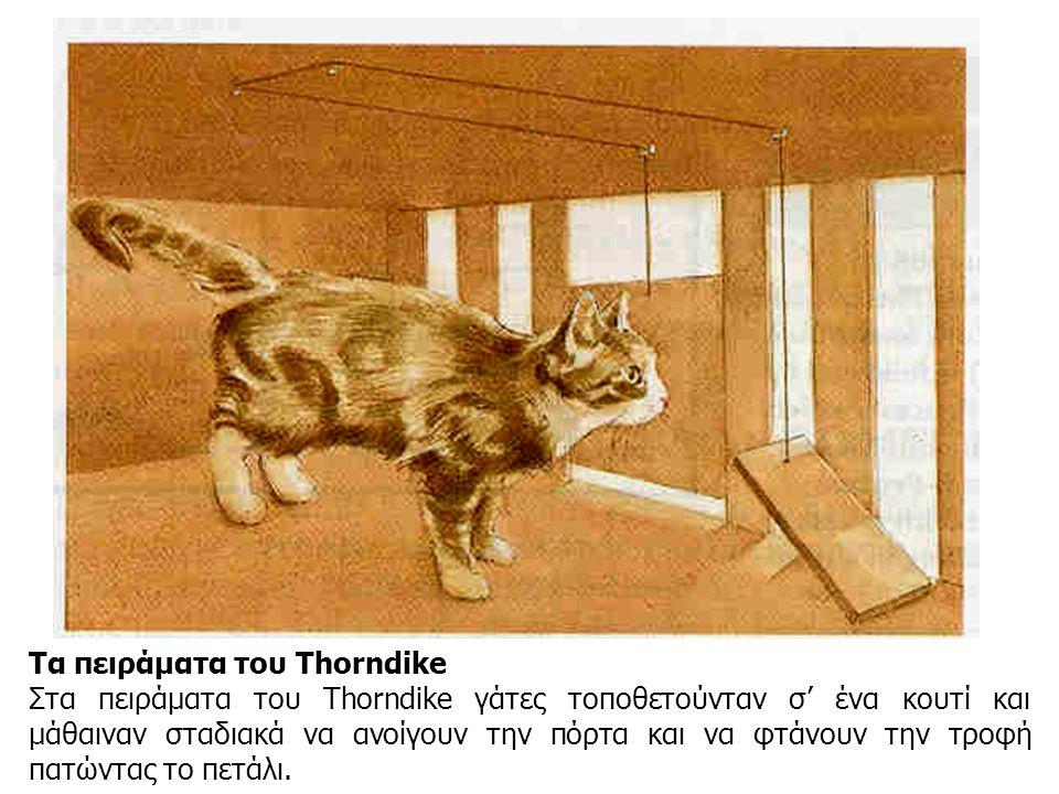 Τα πειράματα του Thorndike Στα πειράματα του Thorndike γάτες τοποθετούνταν σ' ένα κουτί και μάθαιναν σταδιακά να ανοίγουν την πόρτα και να φτάνουν την τροφή πατώντας το πετάλι.
