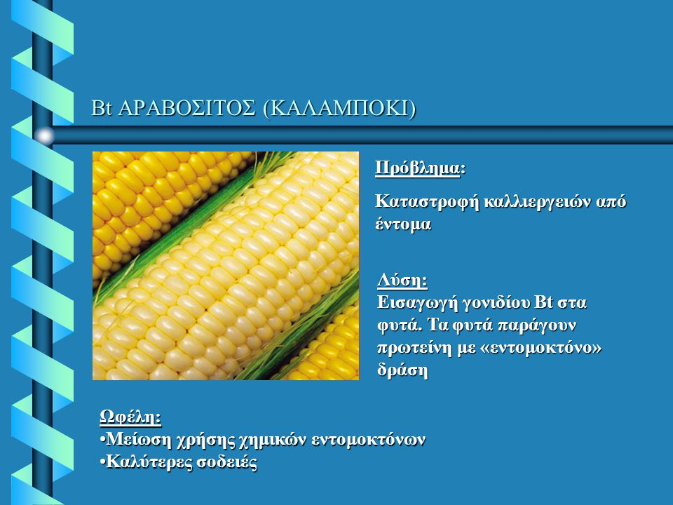 Βt ΑΡΑΒΟΣΙΤΟΣ (ΚΑΛΑΜΠΟΚΙ) Πρόβλημα: Καταστροφή καλλιεργειών από έντομα Ωφέλη: Μείωση χρήσης χημικών εντομοκτόνωνΜείωση χρήσης χημικών εντομοκτόνων Καλύτερες σοδειέςΚαλύτερες σοδειές Λύση: Εισαγωγή γονιδίου Bt στα φυτά.