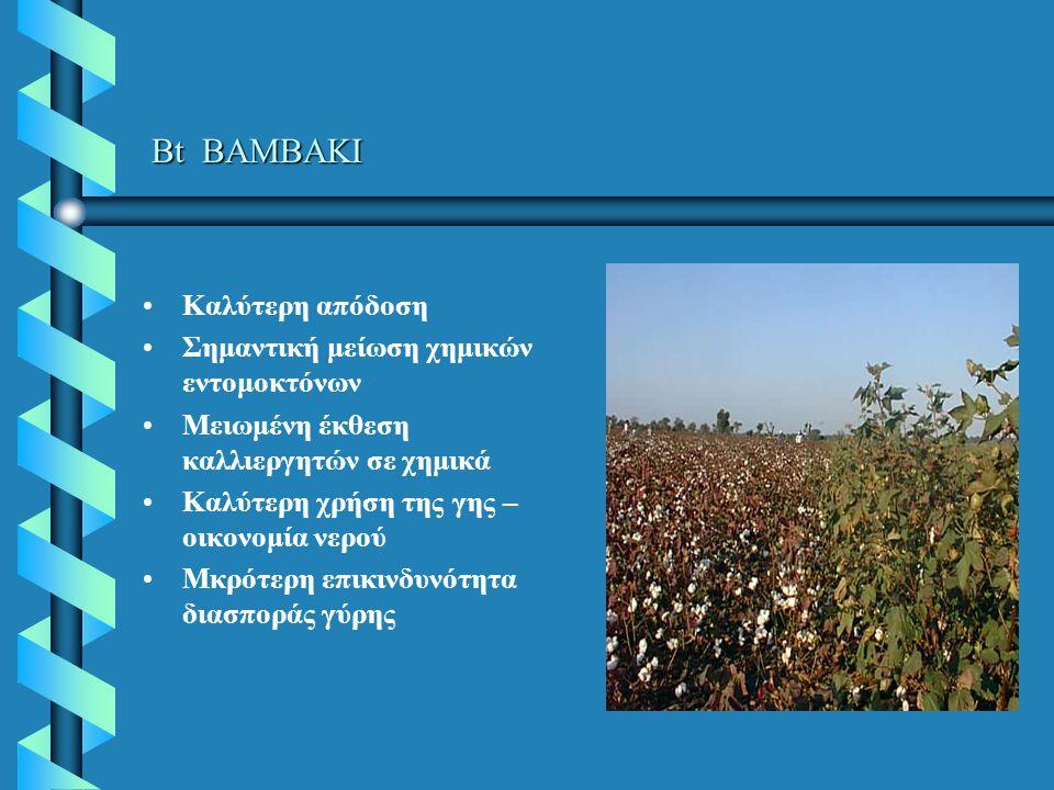 Bt ΒΑΜΒΑΚΙ Καλύτερη απόδοση Σημαντική μείωση χημικών εντομοκτόνων Μειωμένη έκθεση καλλιεργητών σε χημικά Καλύτερη χρήση της γης – οικονομία νερού Μκρότερη επικινδυνότητα διασποράς γύρης